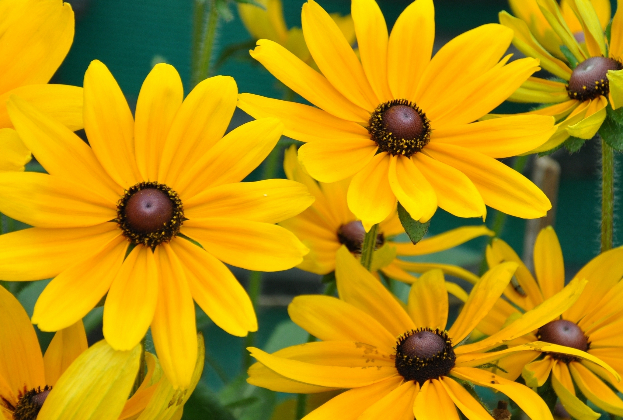 Conserve Water And Reduce Maintenance With Drought Tolerant Species